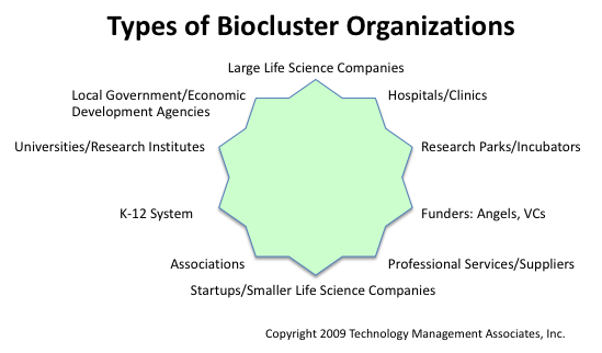 Types of biocluster organizations - 10-point star